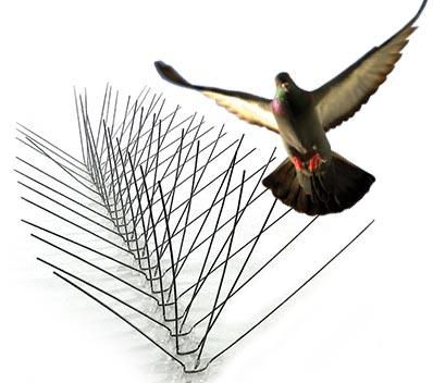 Surekiils Bird Spike by Suren cooke agencies
