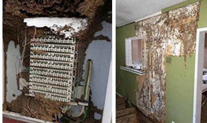 Termite damage to wood
