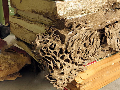 Termite damage to wood